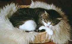 cat in basket asleep