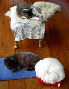 three cats on cushions